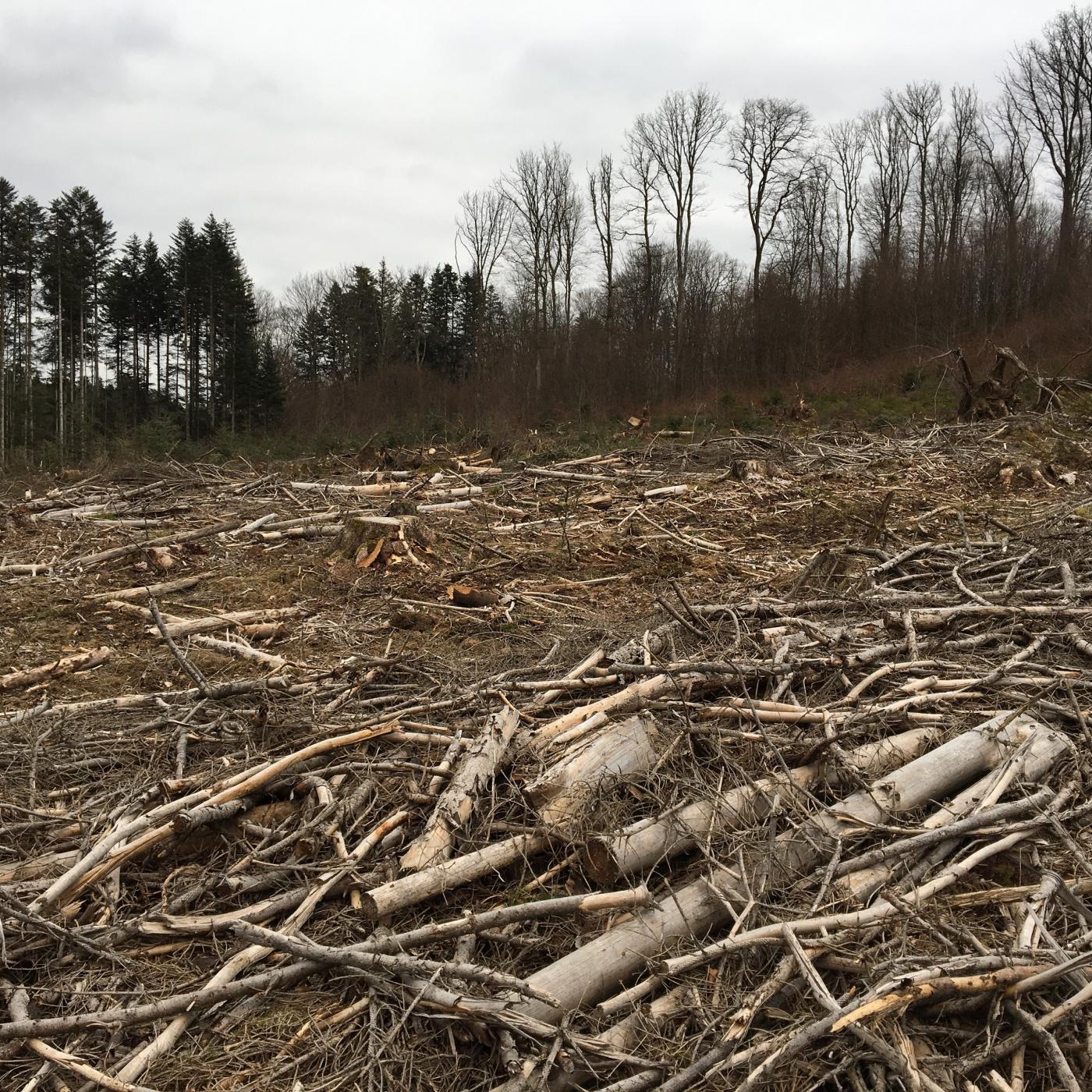 France Relance : La forêt vosgienne soutenue pour implanter de nouvelles essences